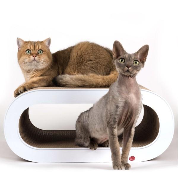 cat-on Oculus Weiss