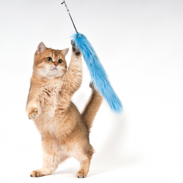 Purrs slinky squirmy wechselanh nger frenzy purrs for Jackson galaxy da bird