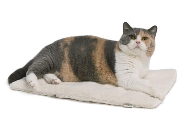 Therapiekissen Feline