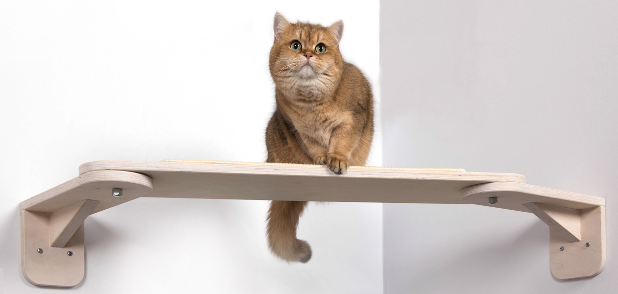 Katzen Catwalks, Wandliegen und Aufstiegshilfen