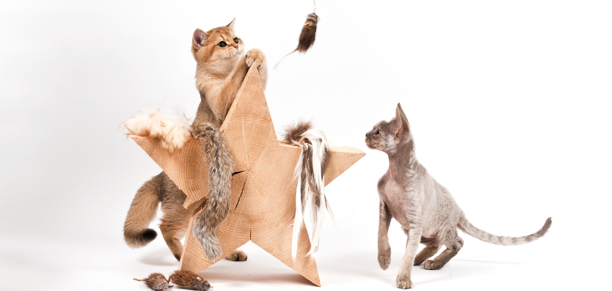 Katzenspielzeug aus Naturmaterialien