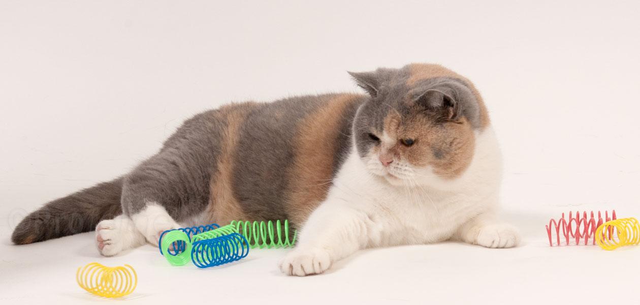 Spiralen & Rollen das neueste für Katzen