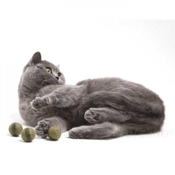 Catnip-Spielzeug - Pawbreakers!