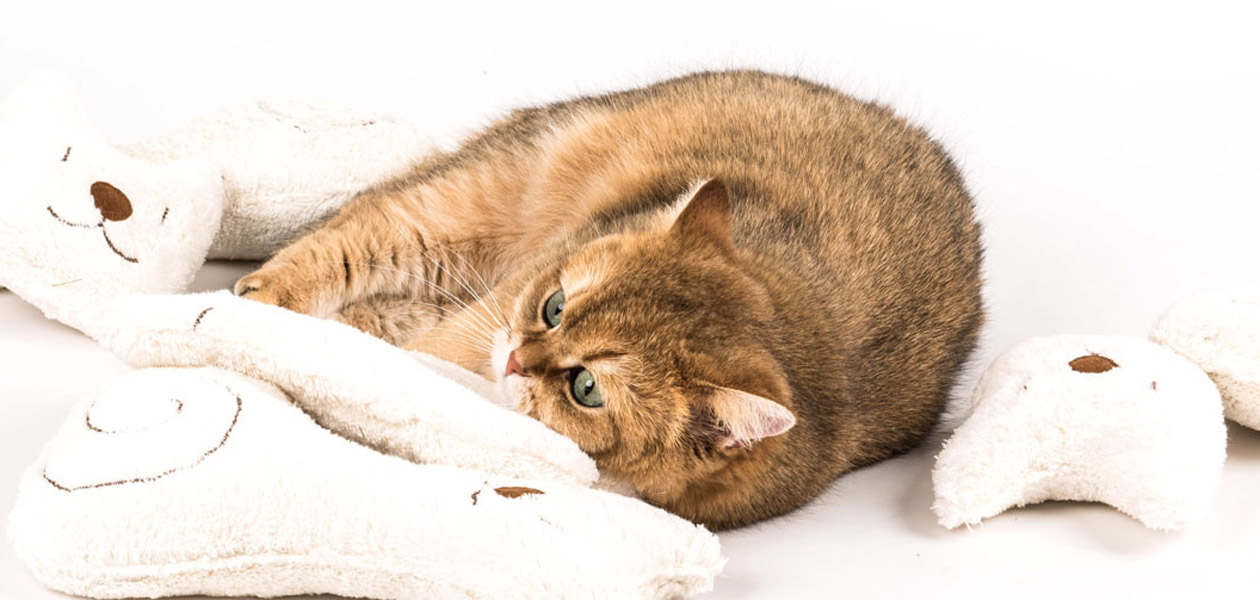 Katzenbetten | Katzenspielzeug direkt vom Hersteller
