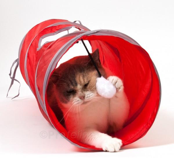 Play Tunnel - Katzentunnel